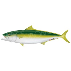 yellowtail-1000-01